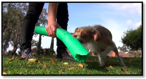 how to use rewards reinforcement positive clicker training dog traininer