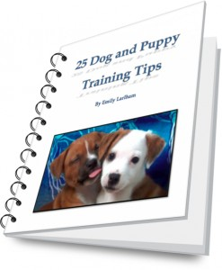 25 dog and puppy training tips