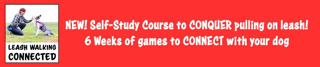 dog training, online dog training, course, emily larlham, dogmantics, kikopup, youtube dog training