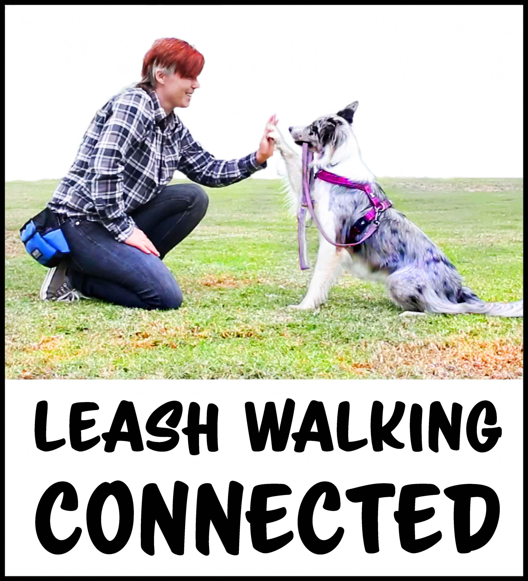Is it harmful to attach a leash to your dog\'s neck? | Dogmantics Dog ...