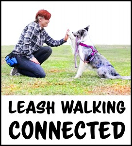Leash Walking CONNECTED
