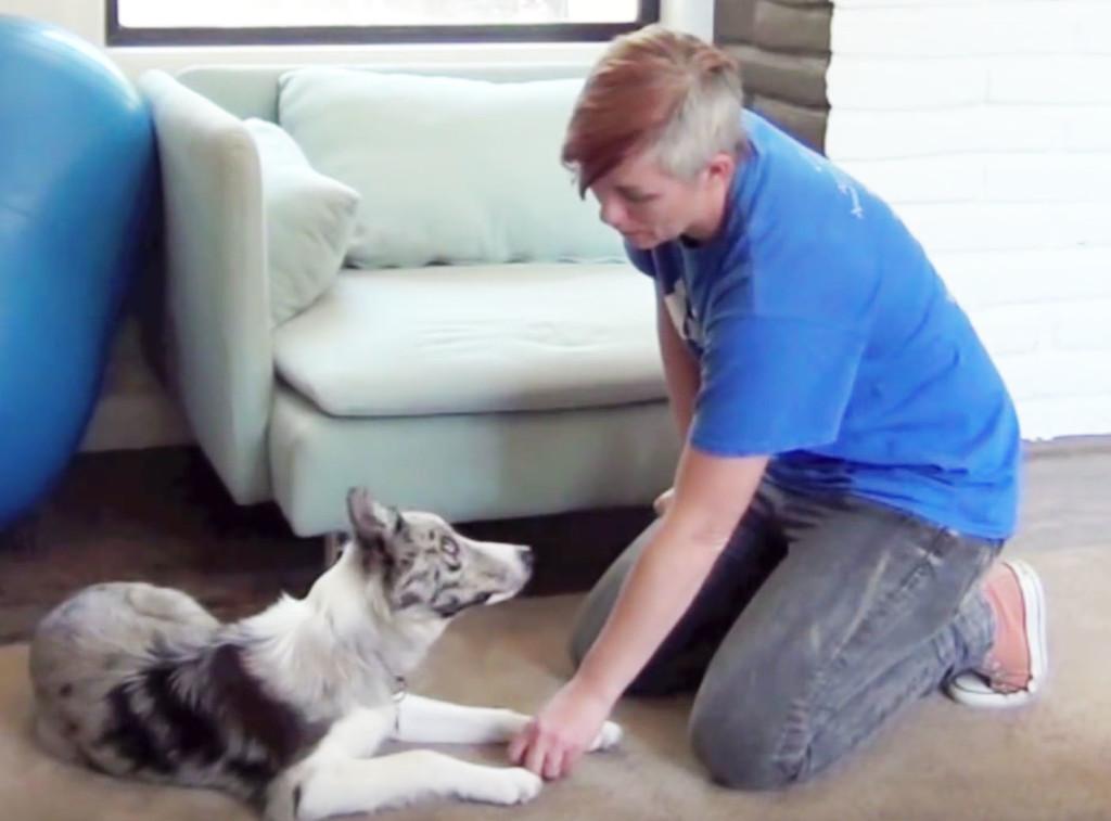 take treats nicely, take treats gently, dog training, clicker training, border collie, dog trainer, professional dog trainer