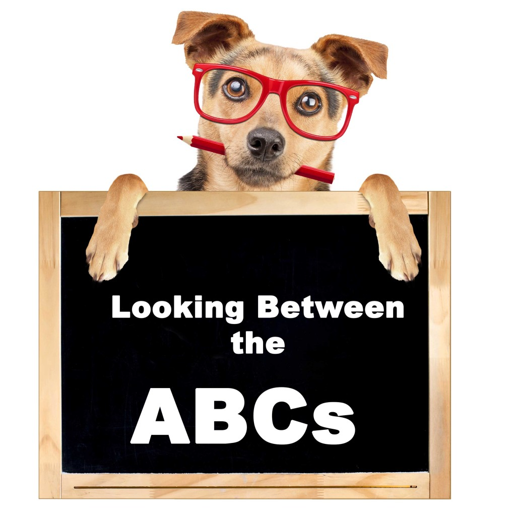 dog training dog trainer how to train a dog youtube dog trainer