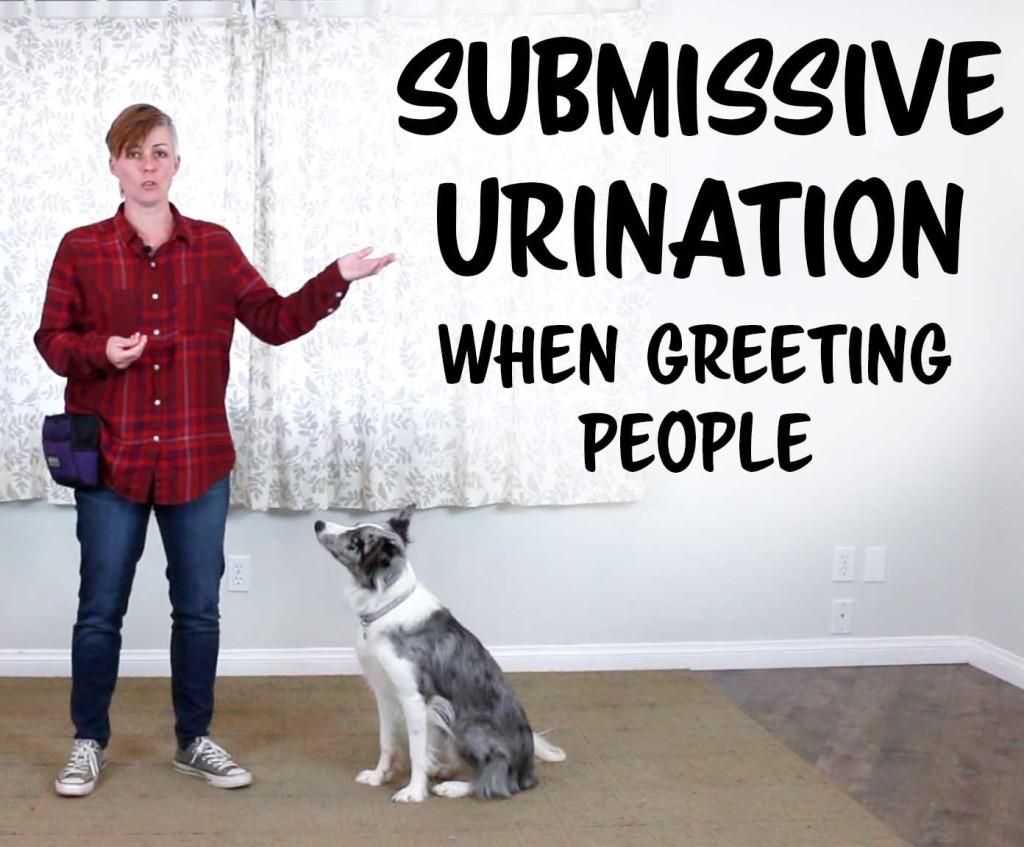 dog training submissive urination youtube