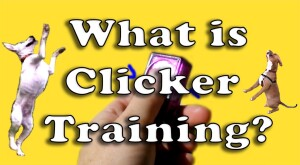 what is clicker training