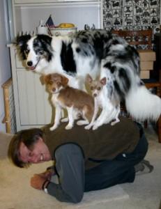 español enseñando perros dog training clicker training cliker