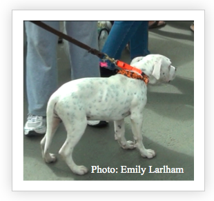 Is it harmful to attach a leash to your dog's neck? | Dogmantics Dog